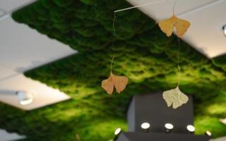 goldene Ginkgoblätter, Deckenstrahler Moosdecke
