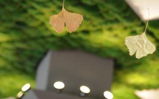 goldene Ginkgoblätter vor grüner Moosdecke